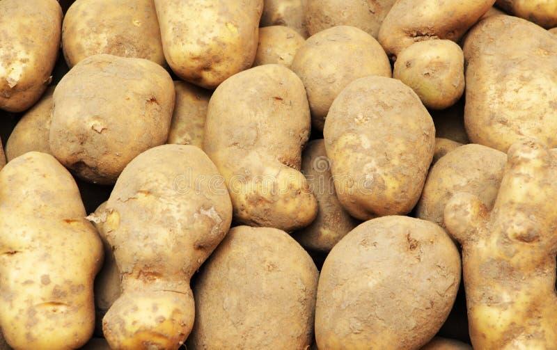 土豆在市场上,肮脏土壤 免版税库存图片