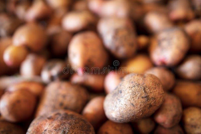 土豆收获在地窖里作为背景 库存照片