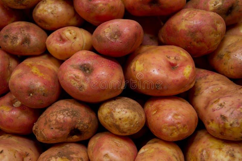 土豆未加工的蔬菜食物模式在市场上 免版税库存图片