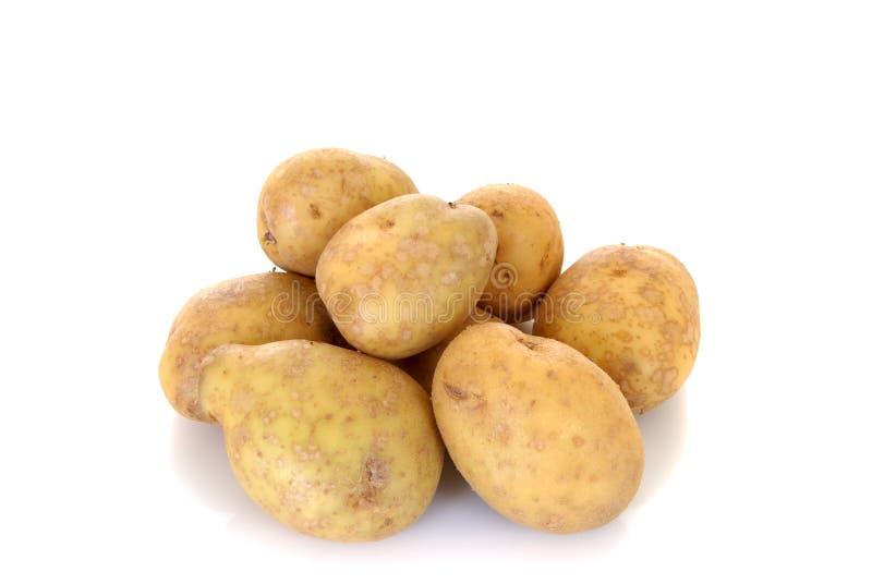 土豆蔬菜 免版税库存图片