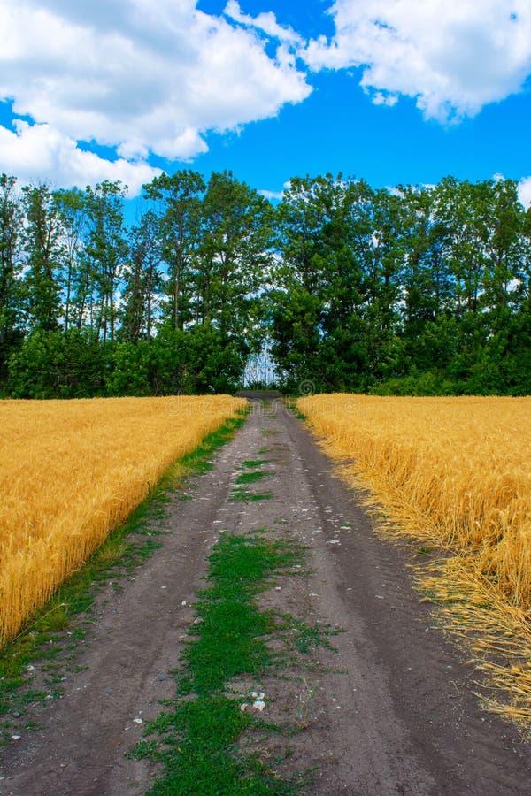 麦田与树和天空土路在照片的在夏天.居住区景观设计彩平注意图片