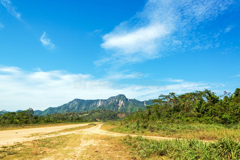 土路和密林小山 库存图片