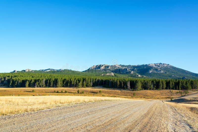 土路和森林 库存图片