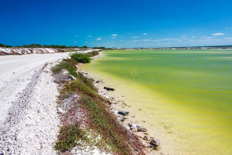 土路和绿色水 免版税库存图片