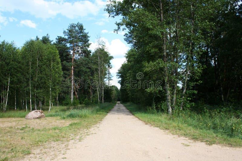 土路在Bialowieza国家公园 免版税库存照片