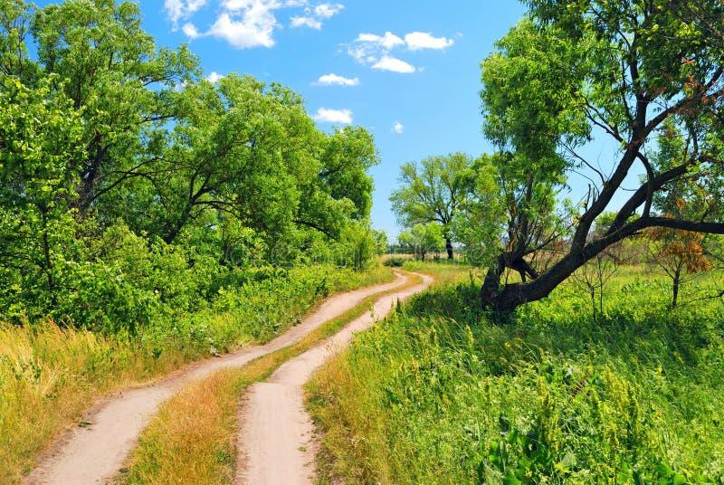 土路结构树 库存照片
