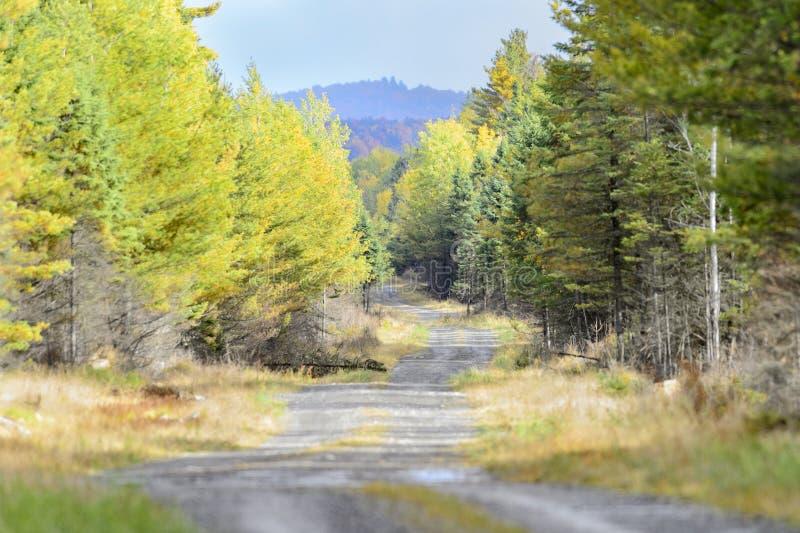 土路缅因森林 库存照片