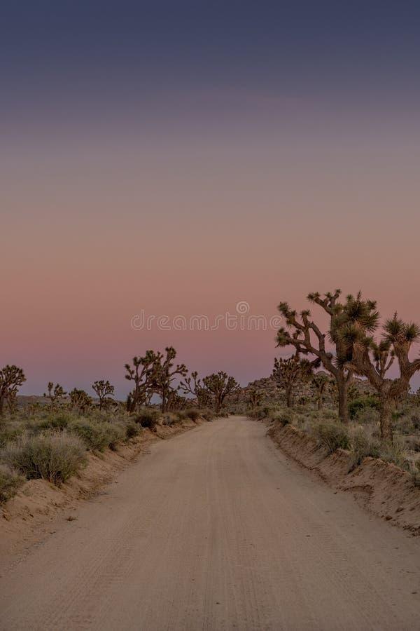 土路通过在黄昏的约书亚树 库存照片