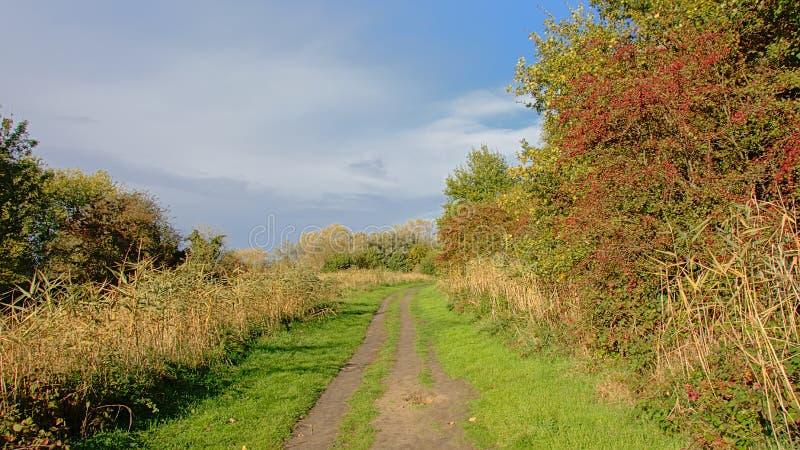土路通过有芦苇和秋天树的佛兰芒乡下在边 库存照片