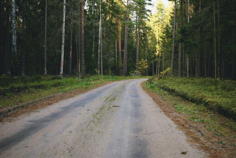 土路通过森林 图库摄影