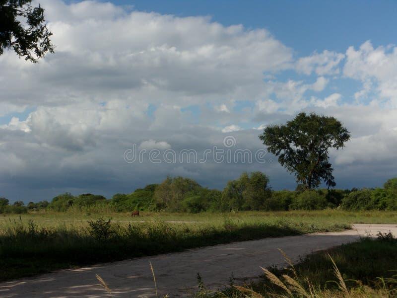 土路,寒带草原,多云天空,白雀树树 免版税库存照片
