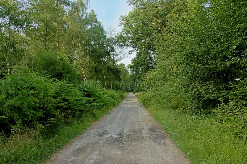 土路thorugh一个绿色夏天森林在埃尔芒翁维尔,法国 库存照片