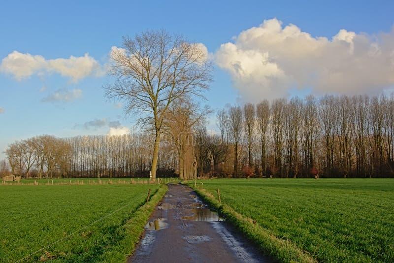 土路thourgh与绿色草甸的一个风景和树和白杨树 免版税库存图片