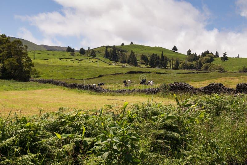 圣地的米格尔,亚速尔群岛国家 库存照片