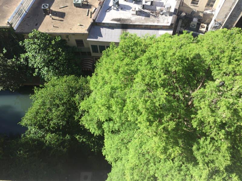 从圣安东尼奥的树 库存图片