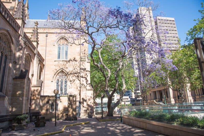 圣安德鲁` s大教堂和悉尼城镇厅 图库摄影