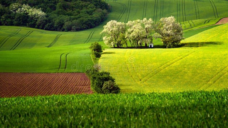 圣巴巴拉教堂以Moravian绿色调遣与在春天的树 库存照片