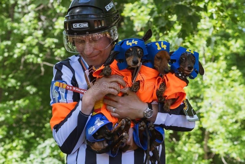圣彼德堡,俄罗斯- 2018年5月26日:拿着短发达克斯猎犬的人 免版税库存图片
