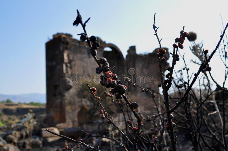 圣徒Gevorg教会和被射击的花 免版税库存图片