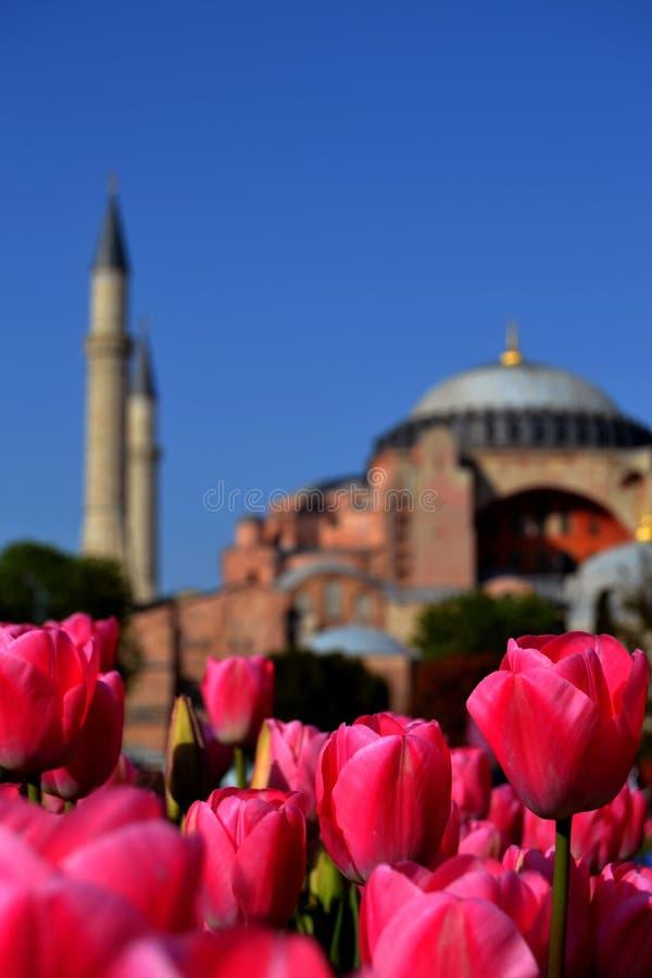 圣索非亚大教堂郁金香伊斯坦布尔爱 免版税图库摄影