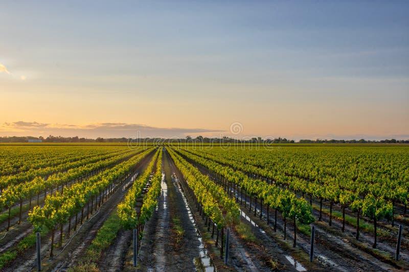 圣约阿奎恩Stanislaus酿酒厂特雷西加利福尼亚 免版税库存照片