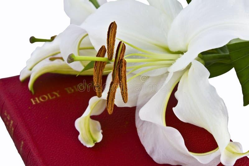 圣经基督徒lillies 库存照片