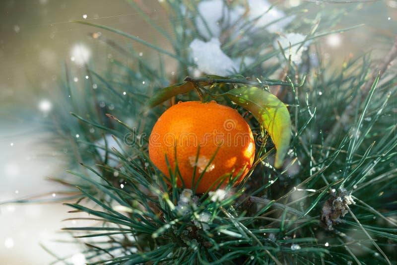 圣诞卡片用在一棵圣诞树的分支的橙色普通话,与落的雪,圣诞节心情 图库摄影