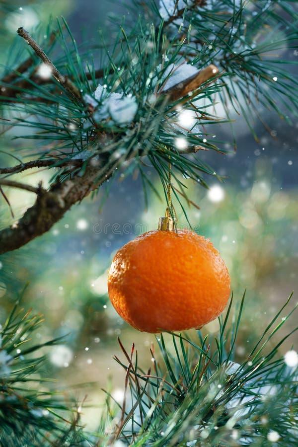 圣诞卡片用在圣诞树分支的橙色蜜桔 免版税库存照片