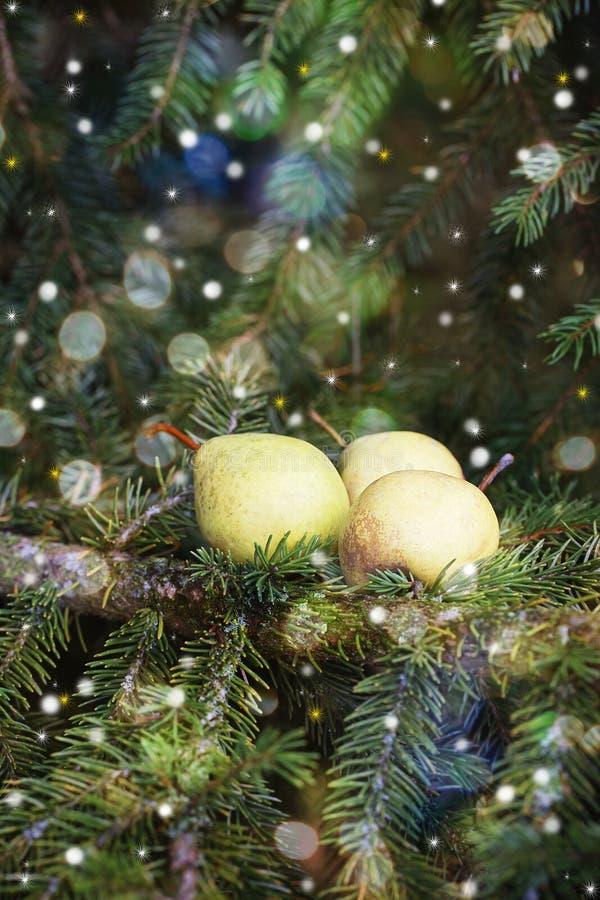 Download 圣诞卡:在一个云杉的分支的梨 库存图片. 图片 包括有 装饰品, 设计, 绿色, 颜色, 艺术, 白兰地酒 - 62537697