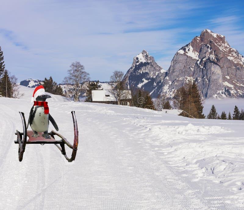圣诞快乐一滑稽企鹅佩带圣诞老人项目滑在雪橇的滑雪小山倾斜下的帽子和围巾 库存照片