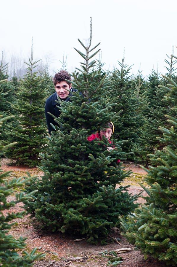 圣诞树农场 免版税库存图片