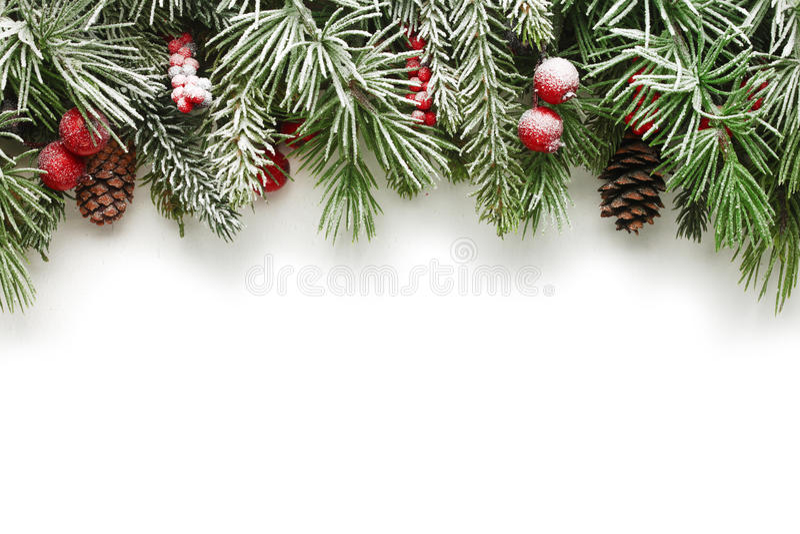 圣诞树分支背景 图库摄影