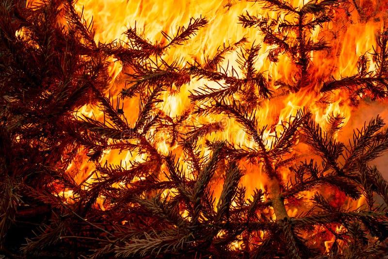 圣诞树发火焰烧 免版税库存照片