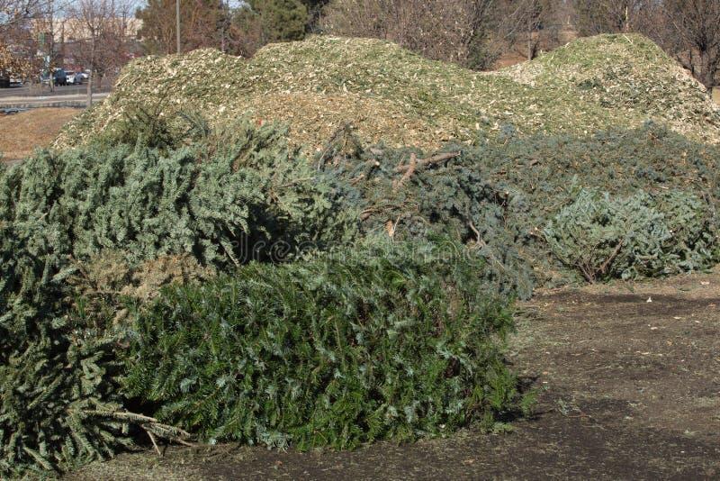 圣诞树回收 图库摄影