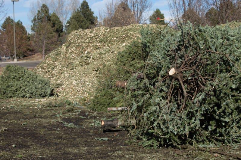 圣诞树回收 免版税库存照片