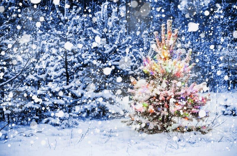 圣诞树在多雪的森林 免版税库存图片