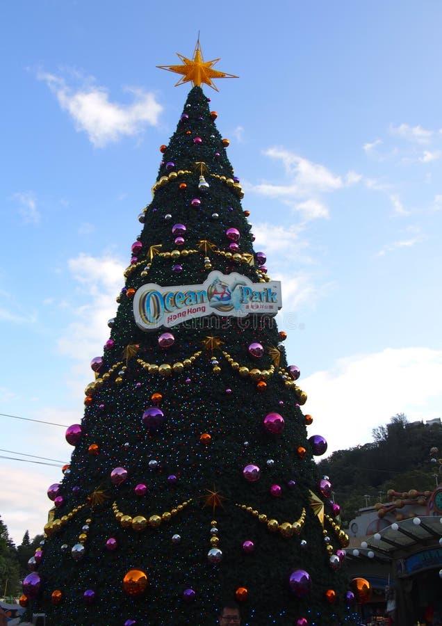 圣诞树在海洋公园在香港 库存照片