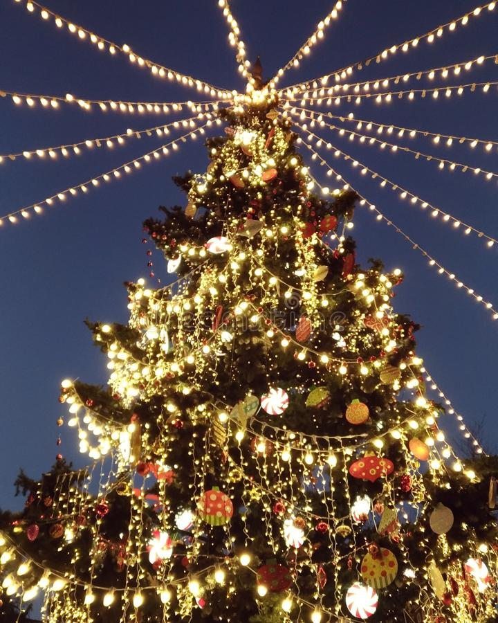 圣诞树在第比利斯 库存图片