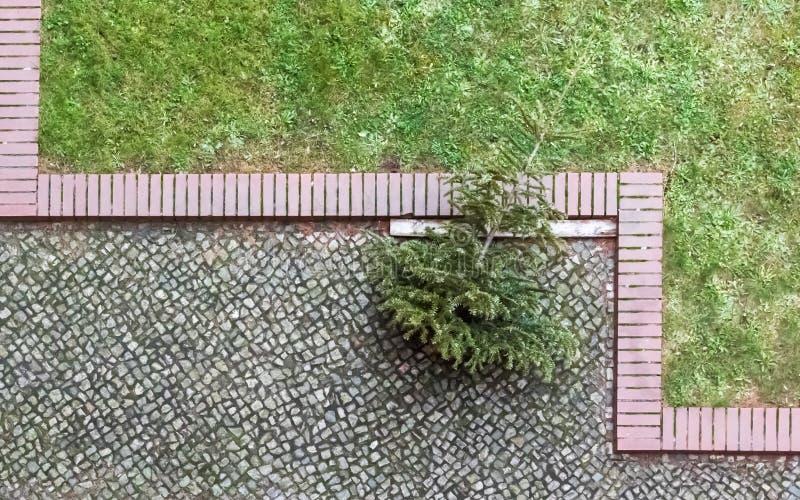 圣诞树是在鹅卵石结束时 免版税库存照片