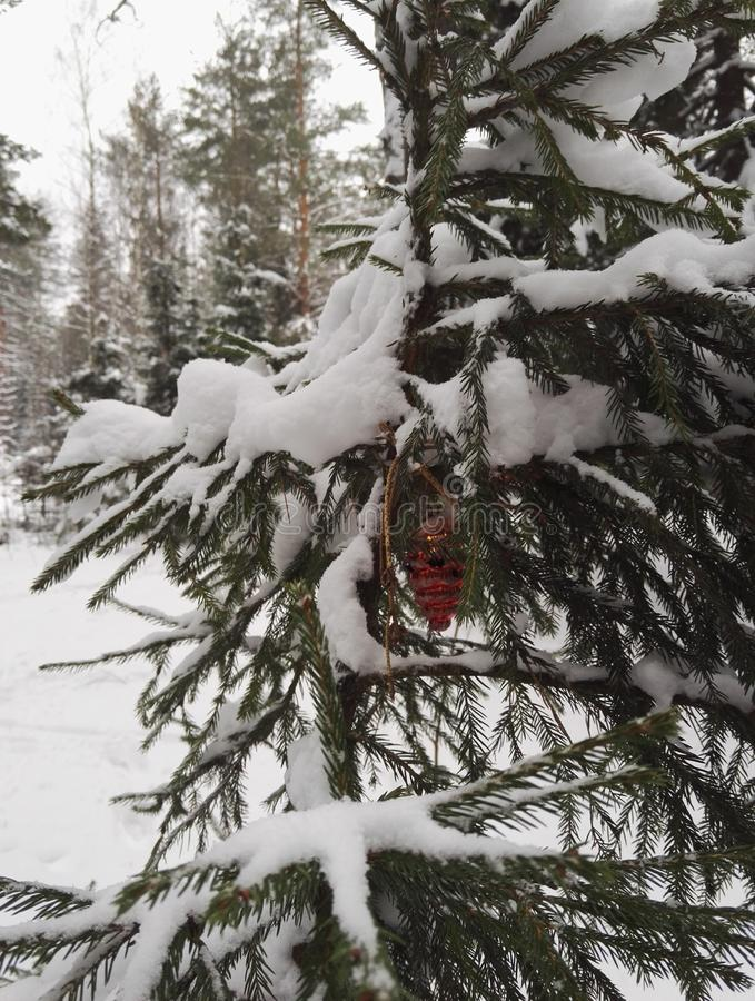 圣诞树玩具在森林 图库摄影