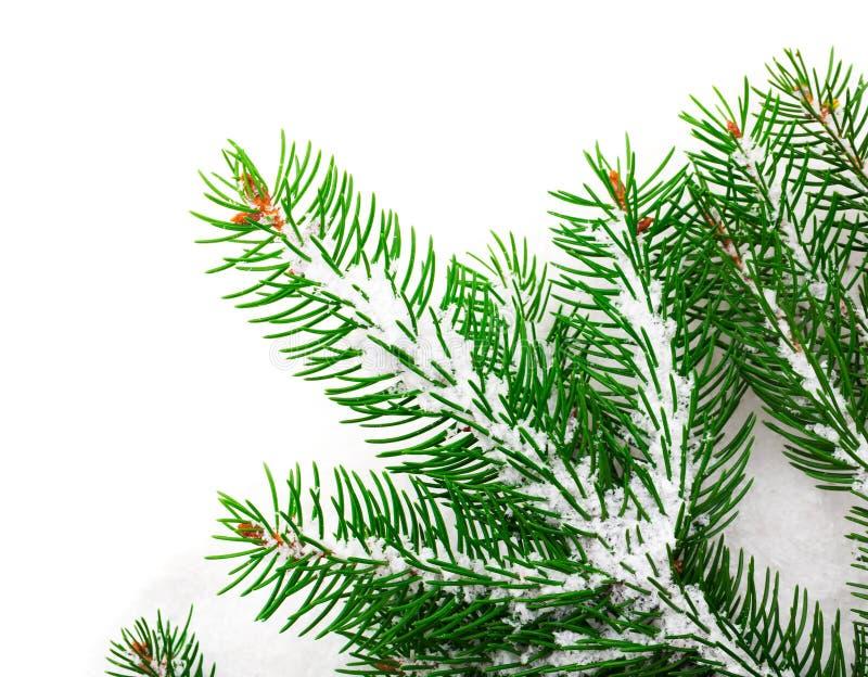 圣诞树绿色分支在雪的 免版税库存照片