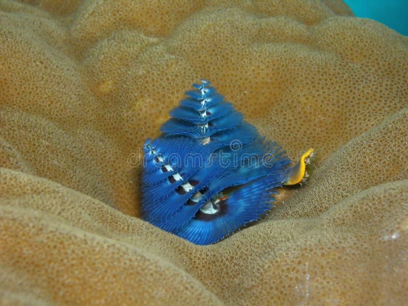 圣诞树蠕虫 免版税库存照片