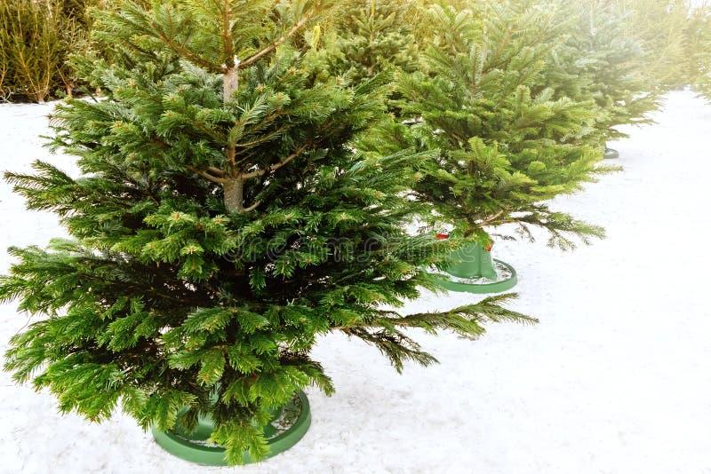 圣诞树销售在12月在一晴朗的冷淡的天 库存图片