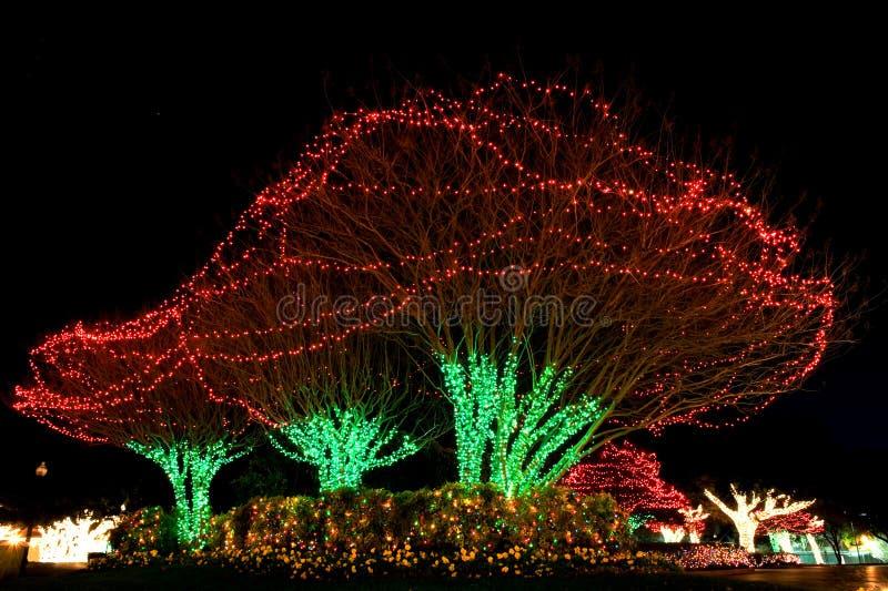 圣诞灯室外结构树 免版税库存照片