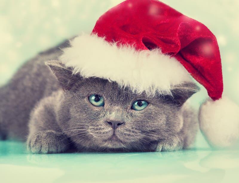 戴圣诞老人帽子的小的小猫 免版税图库摄影