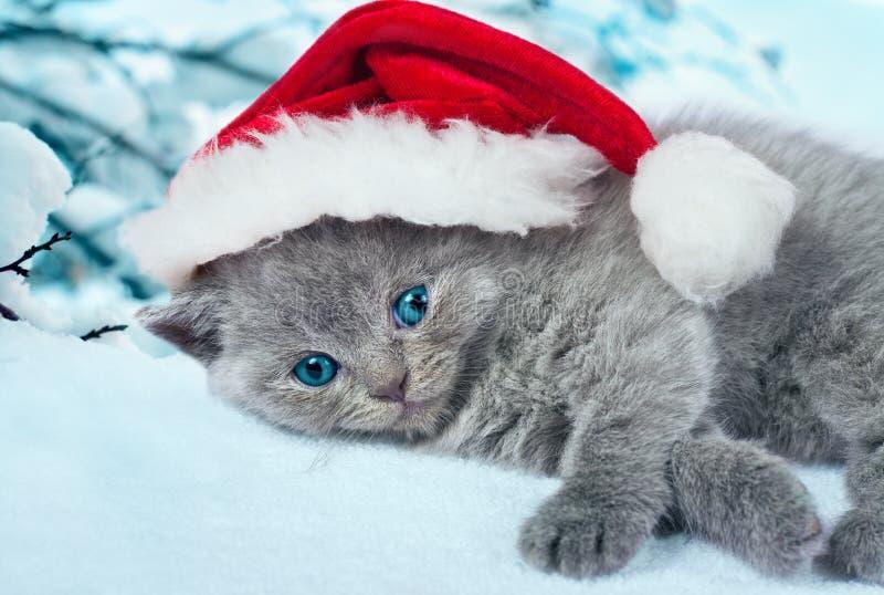 戴圣诞老人的帽子的小猫 库存图片