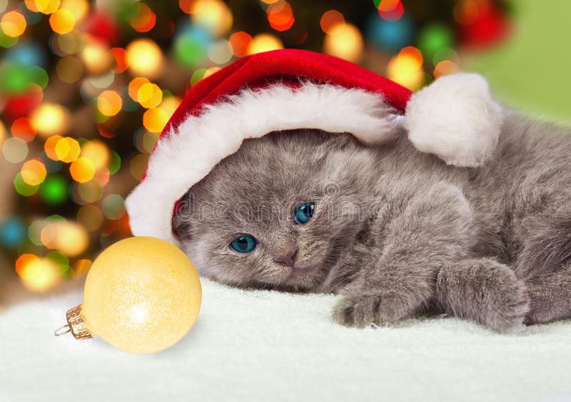 戴圣诞老人的帽子的小猫 免版税库存图片