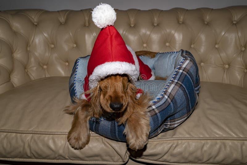 圣诞老人穿戴了新出生的小狗圣诞节 免版税图库摄影