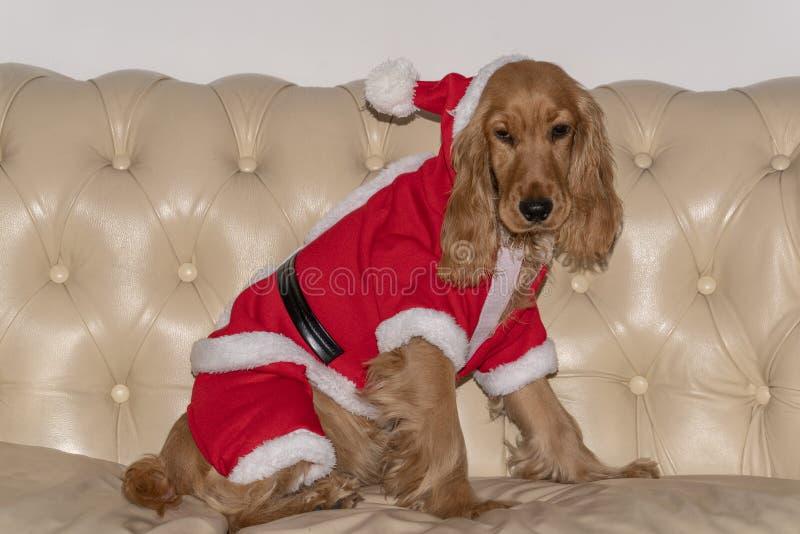 圣诞老人穿戴了新出生的小狗圣诞节 免版税库存照片