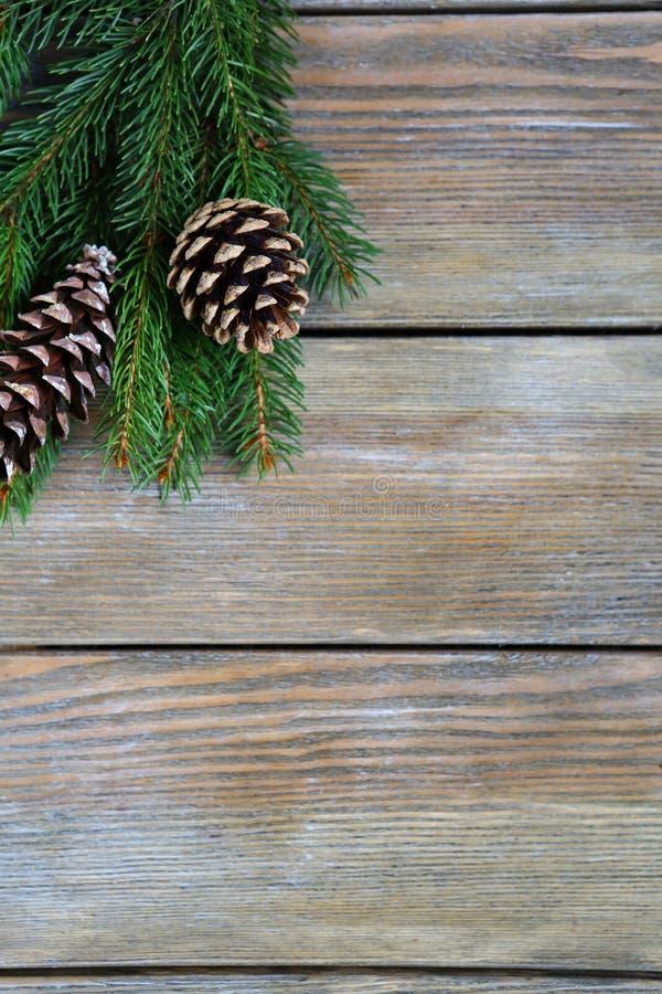 圣诞节与锥体的杉木分支 免版税库存图片